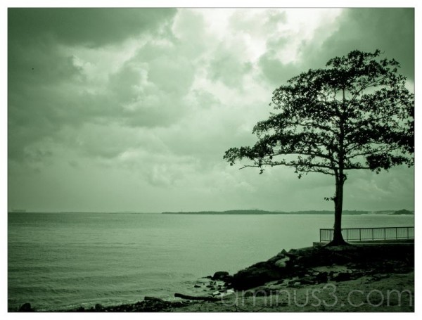 Life – Tree By The Water