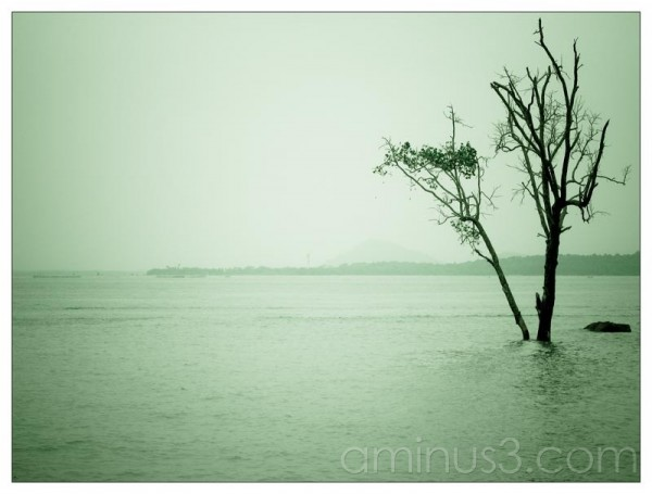 Life – Tree In The Water