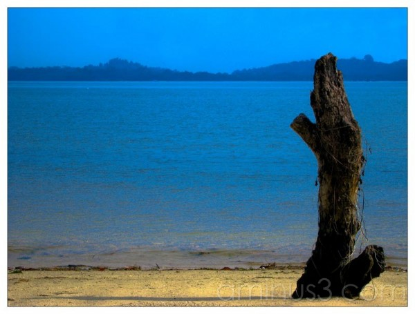 Life – Dead Tree By The Water