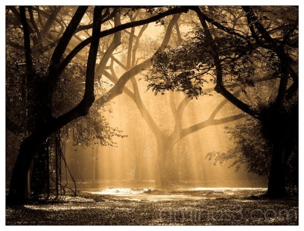 Life's Details – Vapourizing Veil