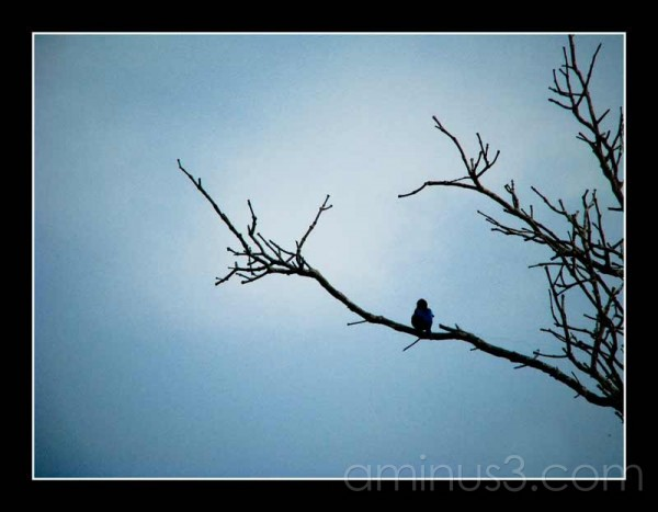 Life's Details – Perched Above