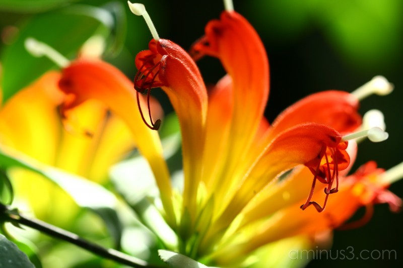 Vibrant colours