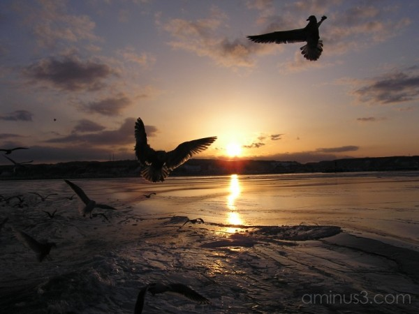 Sunset with the birds