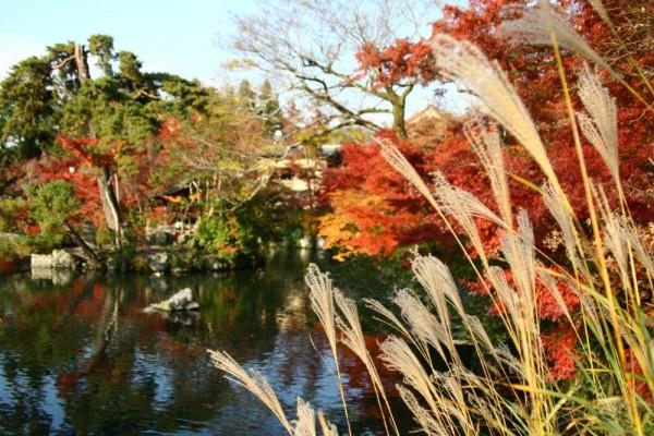 Eikando in autumn