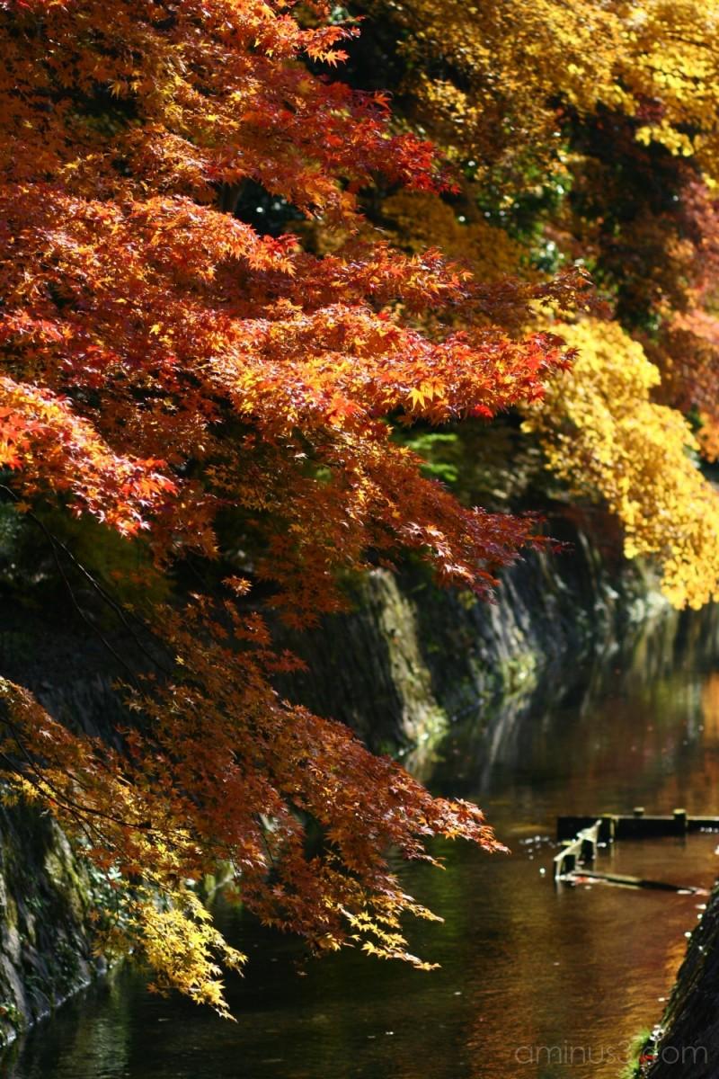 Tetsugaku no michi in autumn