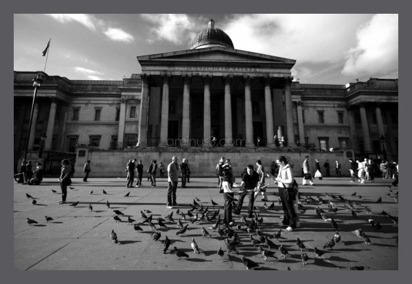 Pigeons and the National Gallery