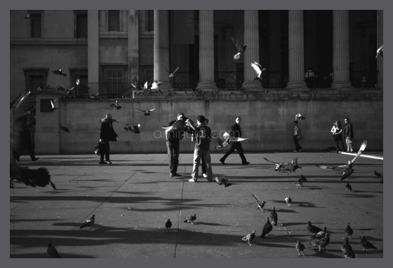 Fly away pigeons