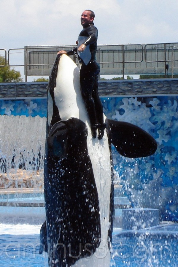 Killer Whale and Trainer