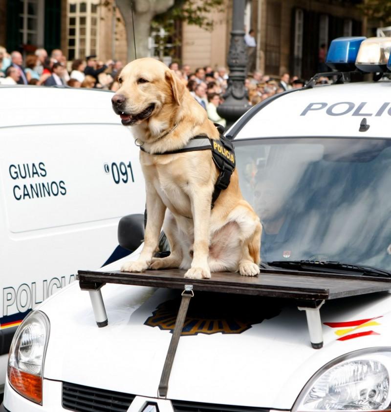 Perro policia