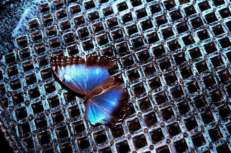 A hurt butterfly