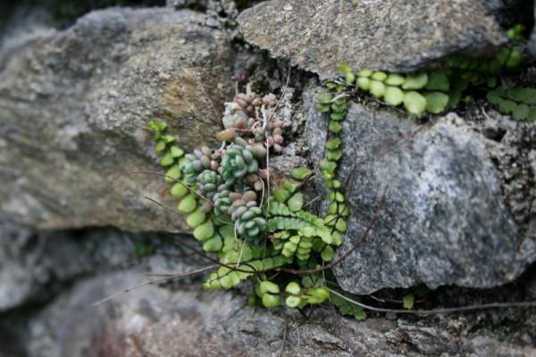 Stony Plant
