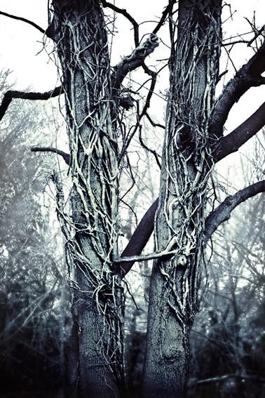 twin trees
