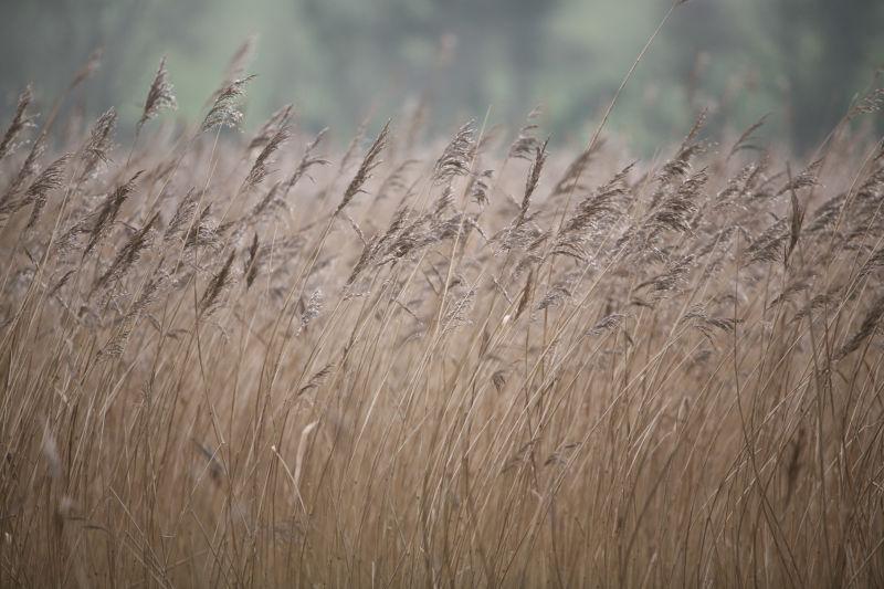 Winter Marsh 1