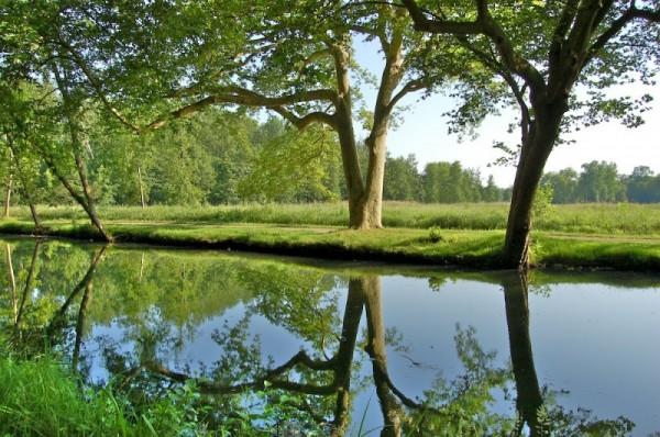 Park of the castle of Courson