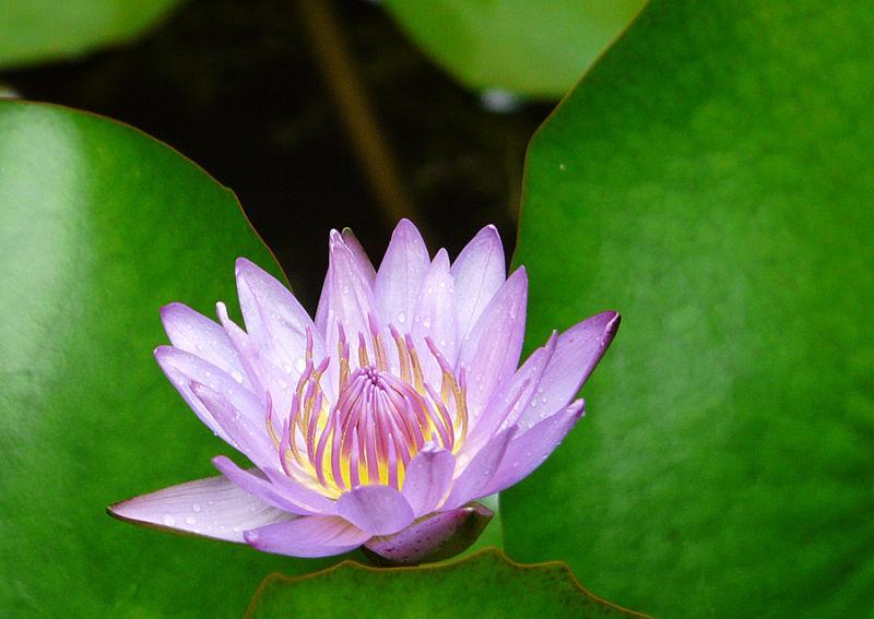 Lotus!!!