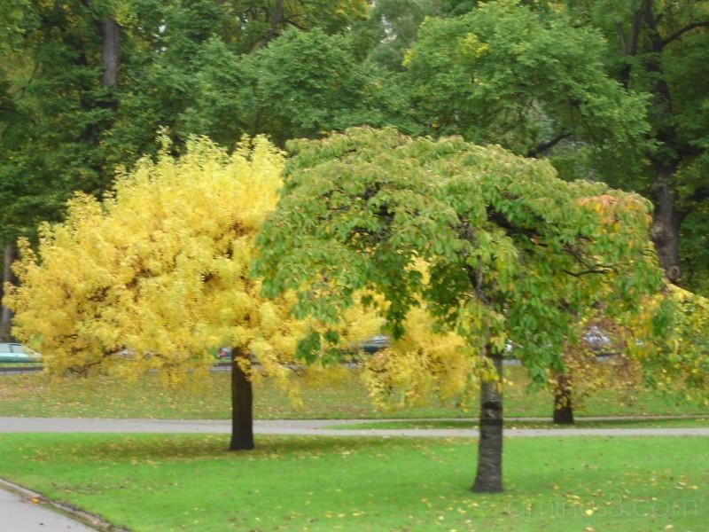 Contrast of seasons