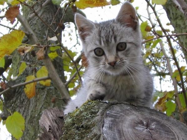 Cat Hungary Porcsin Mogyoróska Natura