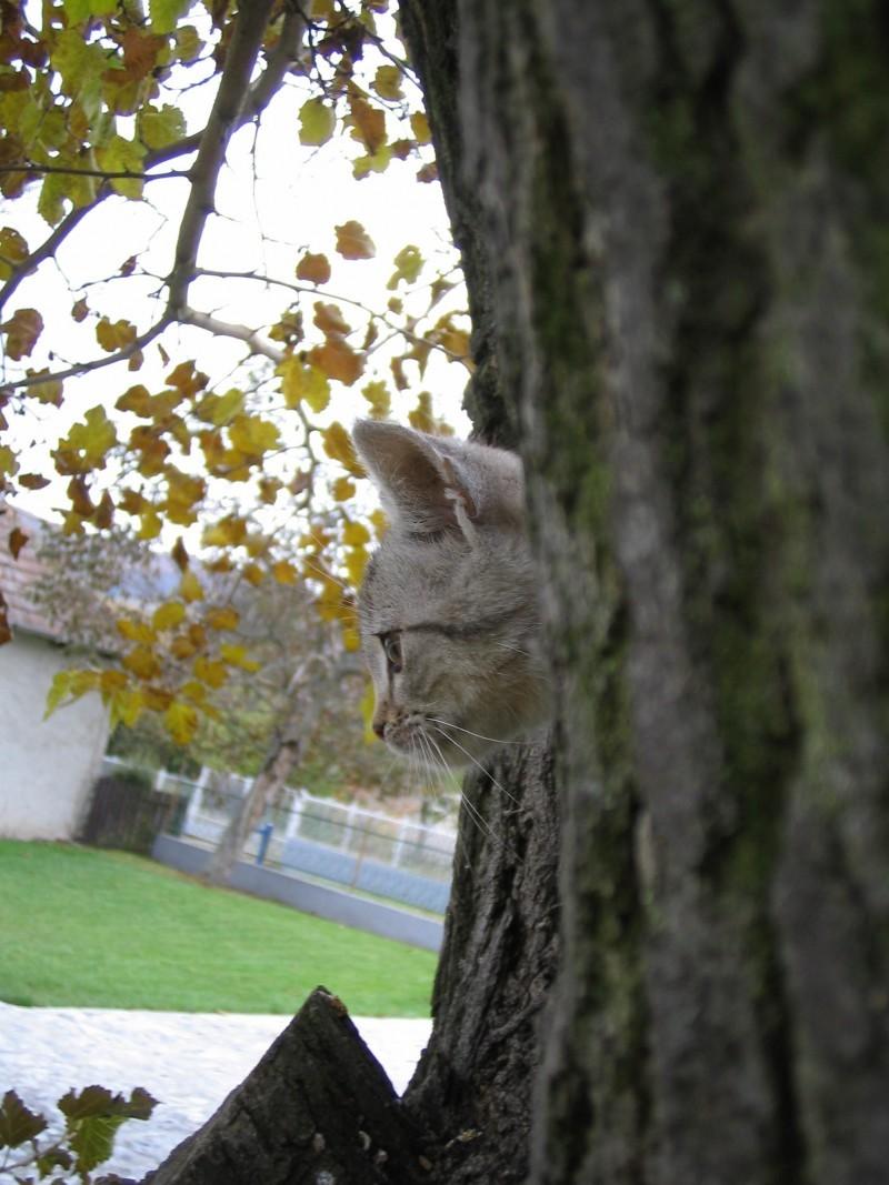 cat pussycat porcsin hungary magyoróska