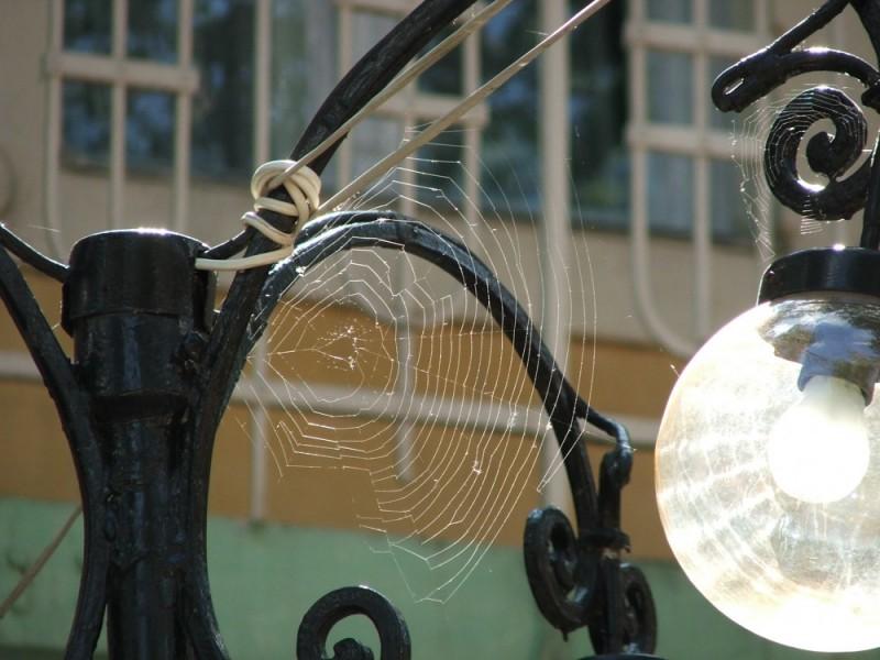hungary romania 2007 spider cobweb nagyvárad porcs