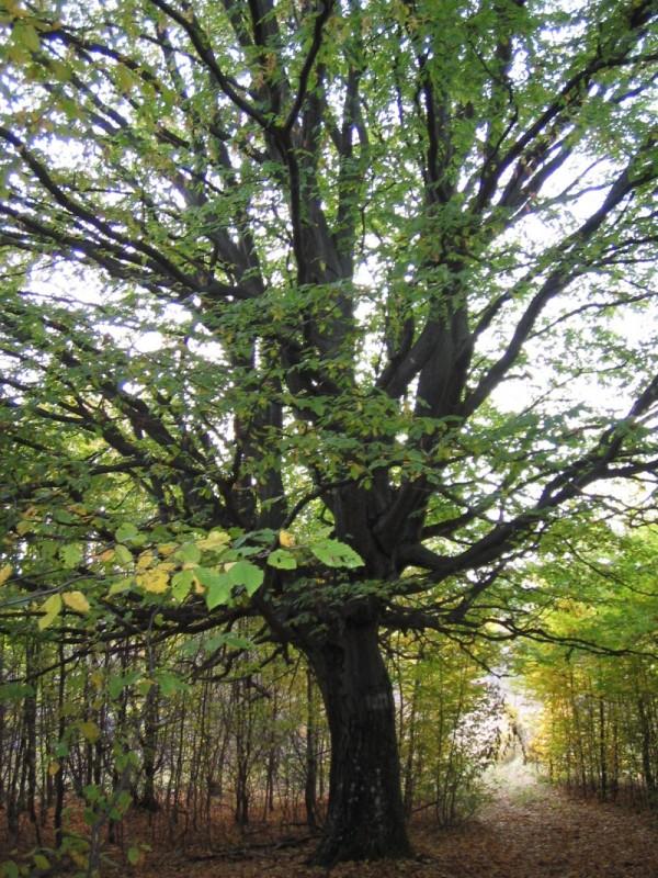 Magyoroska hungary spring 2008 porcsin