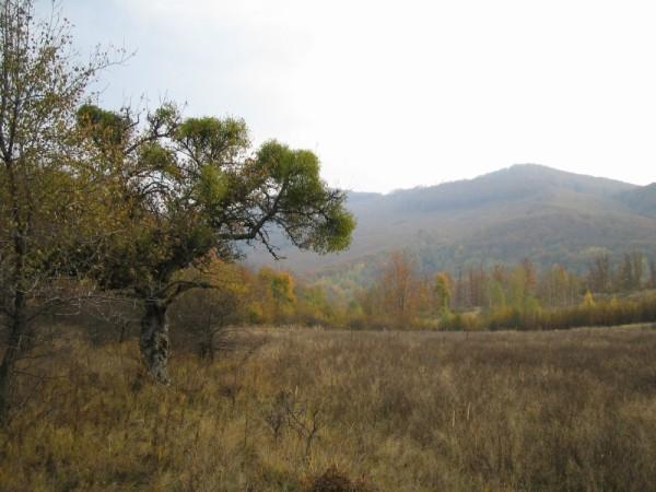 mogyoroska hungary porcsin spring 2007 zemplen
