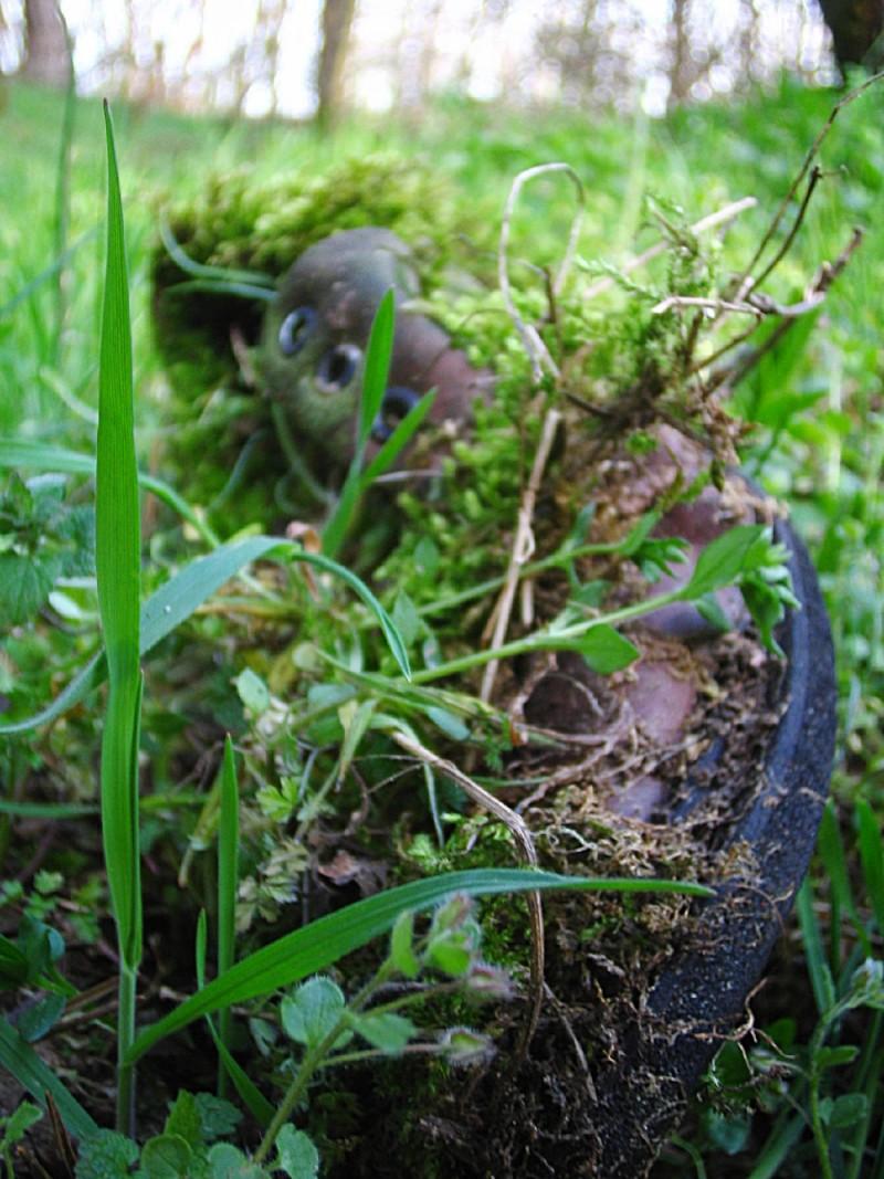 green shoe nature spring hungary debrecen porcsin