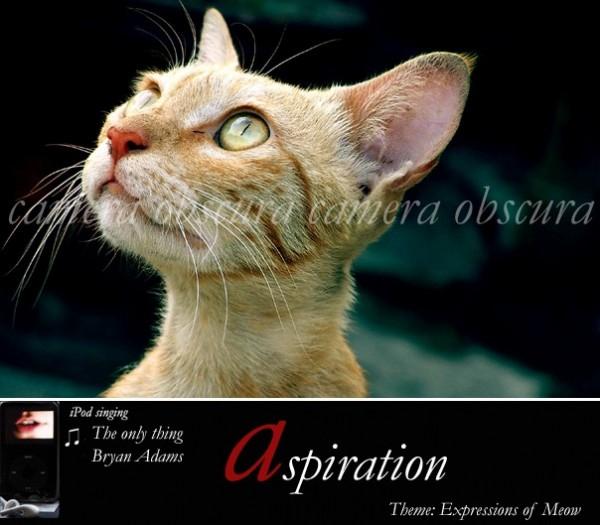 Meow, Camera Obscura, Pranshu