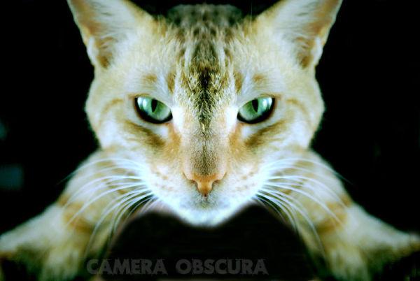 Cat Billi Billo Meow