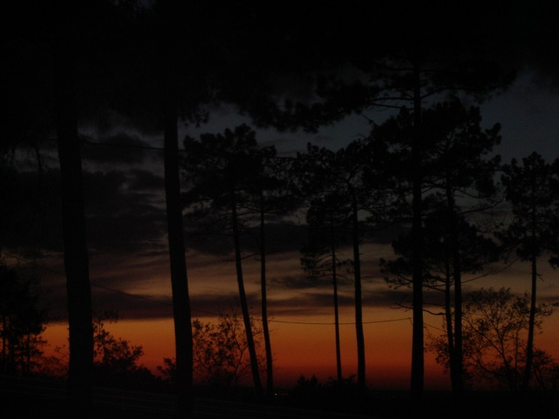 night, sunset, trees
