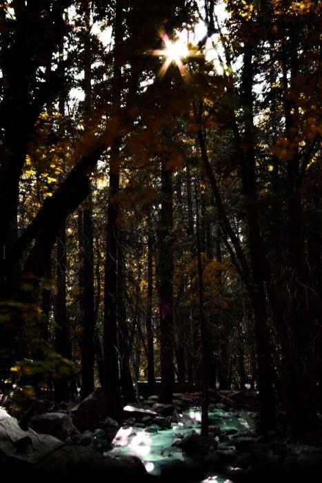 False autumn
