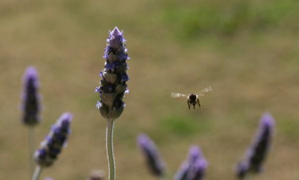 hunter valley bees
