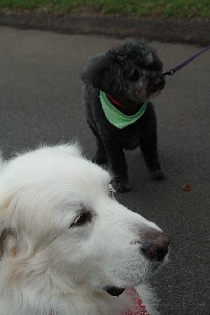 Max and Bridget