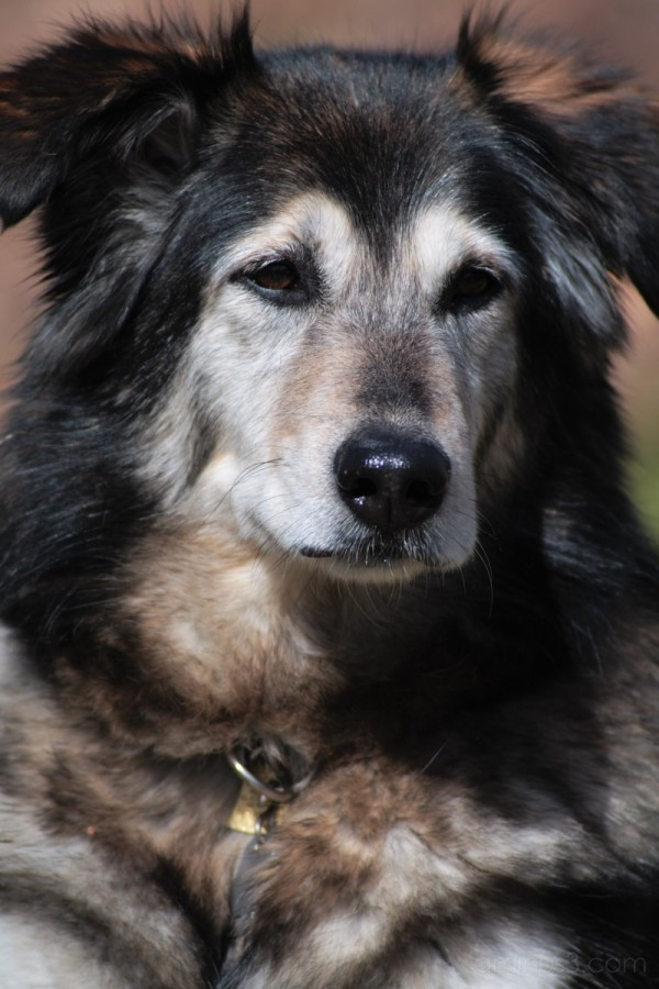 Dog portrait series