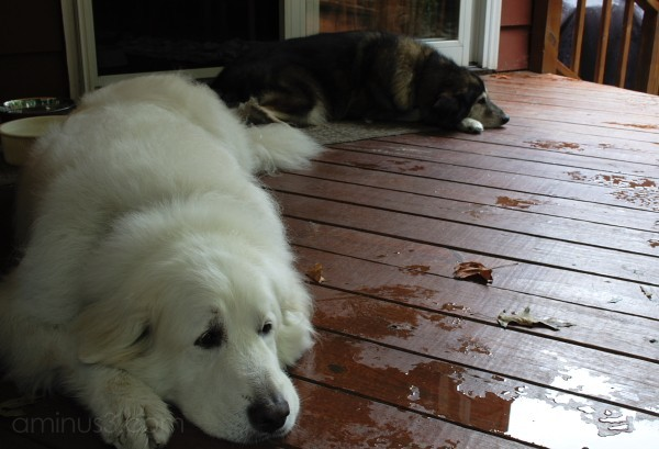 A rainy day and the dogs are waiting to go outside