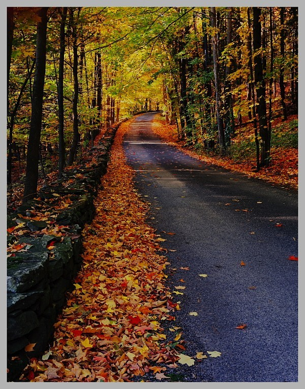 Fall in the Northeast