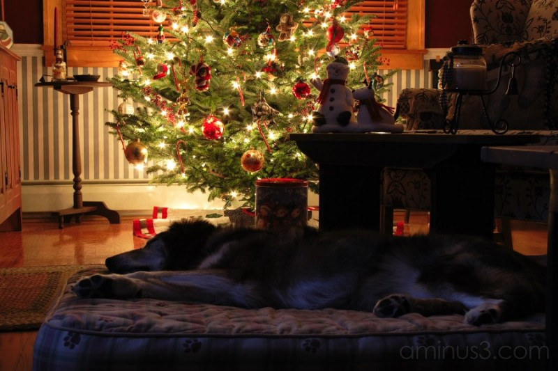 Dogs dream about Santa too