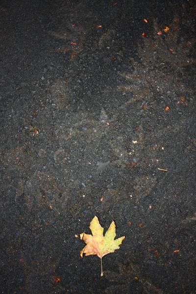leaf on a asphalt