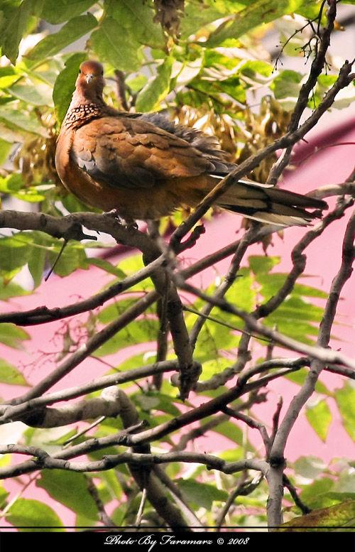 look around Faramarz bird