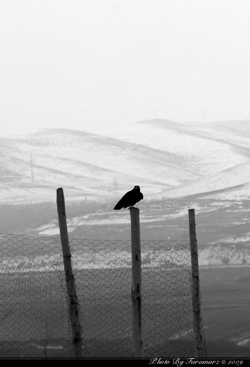 bird landscape none