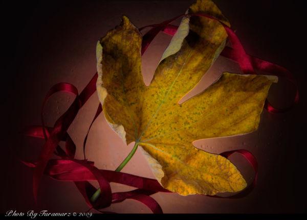 Leaf phiyall studio Faramarz