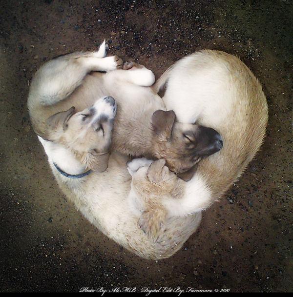 dog animal love