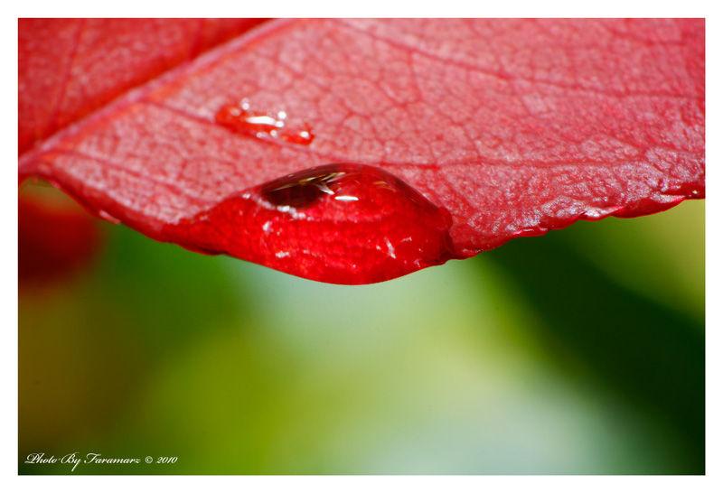 plant  nature micro  leaf