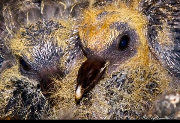 Baby bird close up