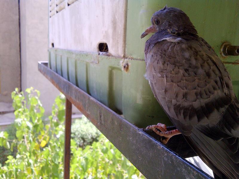 Blackberry bird