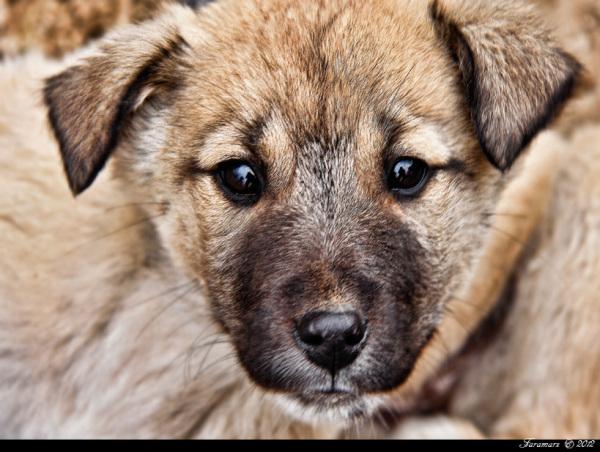 Dog Animal Portrait