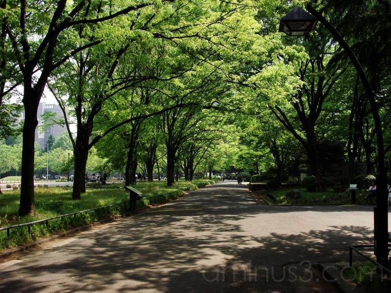 Nature,Park