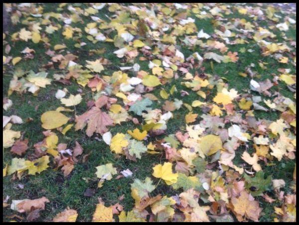 Beautiful fall in Montreal
