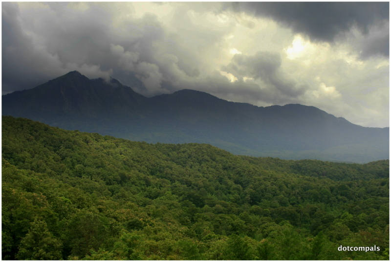 Thick Forests of Parambikulam Wildlife sanctuary