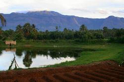 Mountains, Palms and Pond