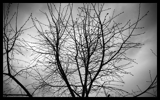 Twig silhouette